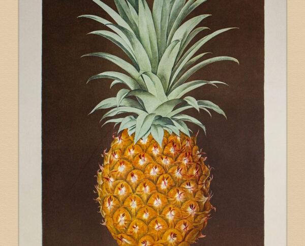 Stampe Frutta e Verdura Ananas